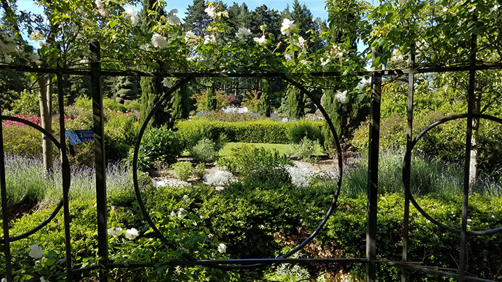 Seattle Woodland Rose Garden